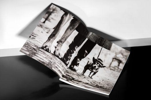 WestLicht Katalog Bild von kleinem Hund