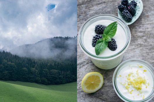 Frühstück mit Joghurt und Beeren und Waldstück